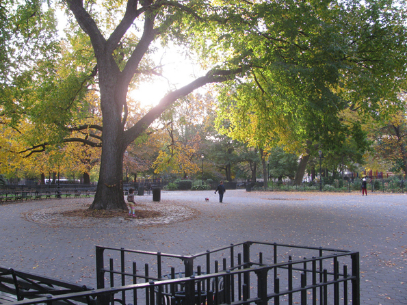 The Hare Krishna Tree in Tompkins Square Park. Image via edenpictures on Flickr.