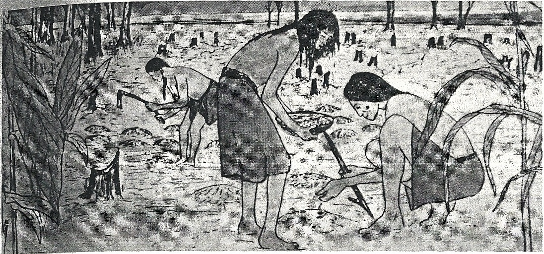 Lenape men preparing soil for cultivation. Reprinted from The Lenapes by R. S. Grumet and F. W. Porter, 1989, New York, Chelsea House.