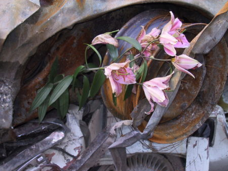 Closeup of Lillies Laid in the Wheel of a Destroyed Car.JPG